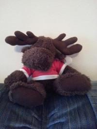 Moose in Red T Shirt